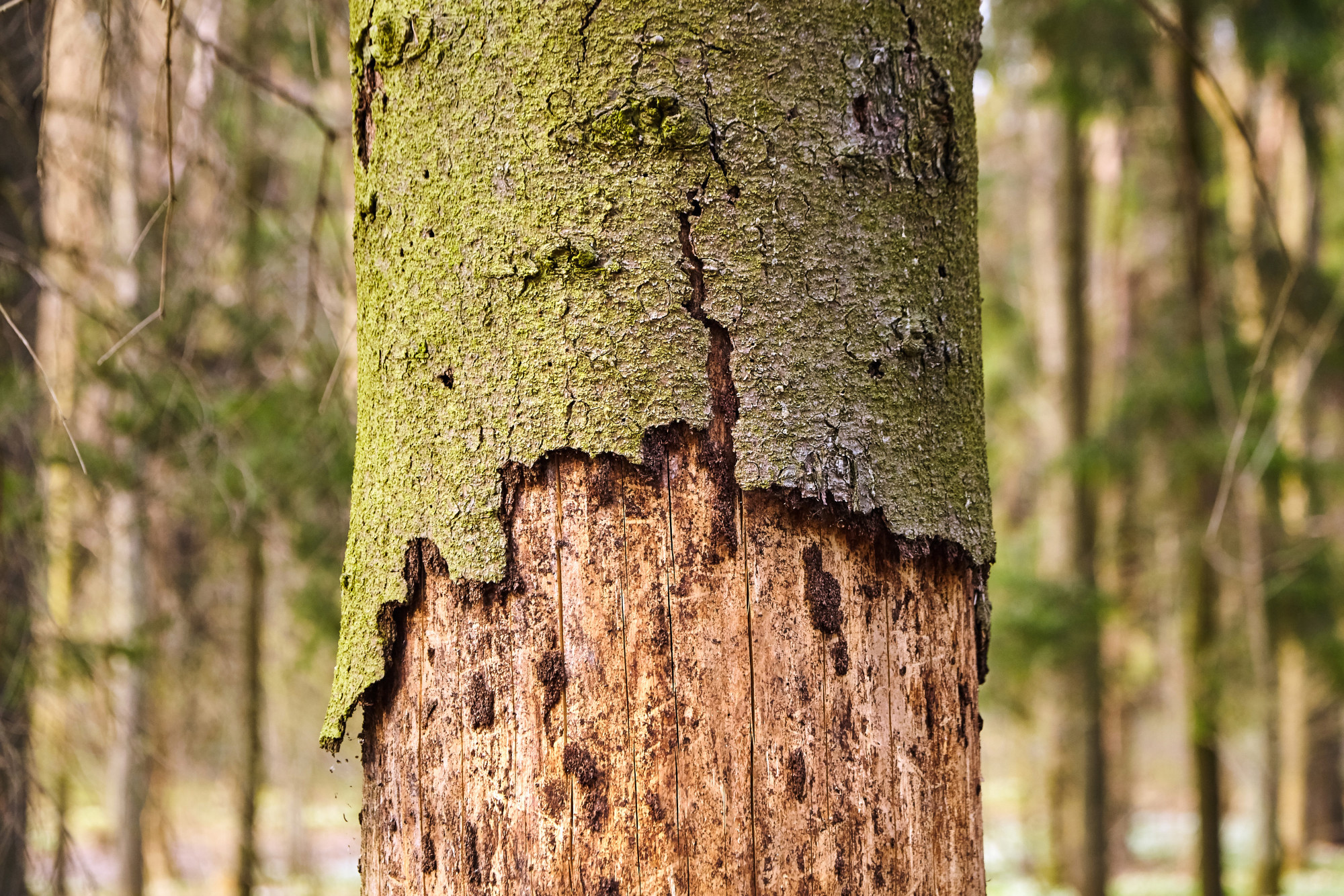 Image result for signs your tree may have a disease