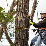 The Top Five Benefits of Tree Pruning in Waltham, MA